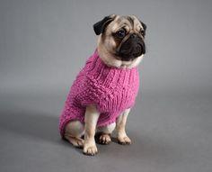 O Pug é um cachorro com um corpo pequeno, mas bem compacto e forte. Aprenda mais sobre ele conosco :) #pug #carlino #raças #cachorros #dogs #cães