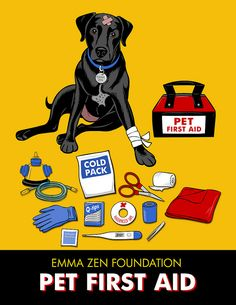 Know how to help your pet!