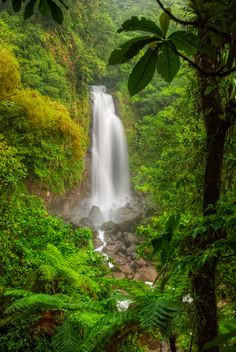Jungles in Dominica engulf the left of the twin Trafalgar falls. The water is heated by geothermic activity, joining the cool waters from the neighboring falls downstream..
