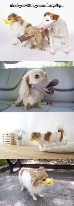 Sélection de la semaine, #WTF, #Cosplay, #Geek, #FunFacts, #Design, #Photographie, #Vrac - Accessoire animaux – Une mussolière duckface pour son chien