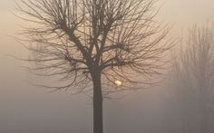 Scompare la nebbia in val padana: ricerca Cnr #nebbia #riscaldamentoglobale #valpadana