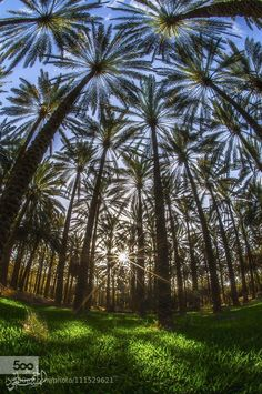 A palm tree forest! Beautiful World, Beautiful Places, Beautiful Pictures, Unique Trees, Palmiers, Tree Forest, Amazing Nature, Belle Photo, Wonders Of The World