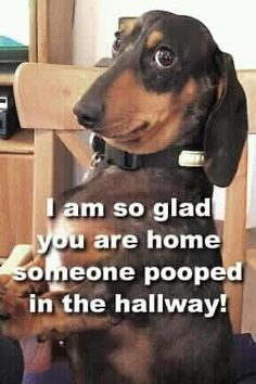 love this - reminds me of my friend, Chell's weiner dogs. @juliawettschrec