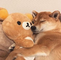 Like puppies, bunnies, babies, and so on. A place for really cute pictures and videos! Cute Funny Animals, Cute Baby Animals, Funny Cute, Animals And Pets, Rilakkuma Plushie, Plushies, Chien Shiba Inu, Cute Puppies, Cute Dogs