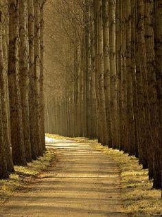 un chemin dans le bois