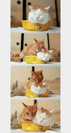 Squeeeeeeze! #cats  @Juliana Loh