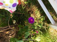 Purple in between  #turkey #bozcaada #areej_aljord_photography #purple #flower