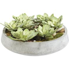 Ethan Allen Echeveria in Bowl ($509) ❤ liked on Polyvore featuring home, home decor, floral decor, plants, fillers, flowers, decor, green, distressed home decor and flower bowl