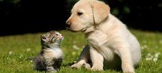 Remedios caseros para problemas comunes de tu mascota