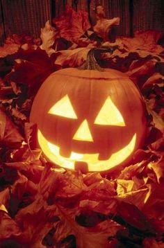Carved halloween pumpkin in autumn leaves – Kürbisse schnitzen - Water