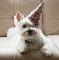 Cute Dog Birthday |  #birthday #animalbirthday