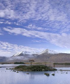 Solitaire, Rannoch Moor, Glencoe, Scotland, beautiful, winter, morning, motionless, mist, island, tree, snow, Blackmount photo