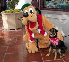 El perro más feliz del mundo. #humor #risa #graciosas #chistosas #divertidas