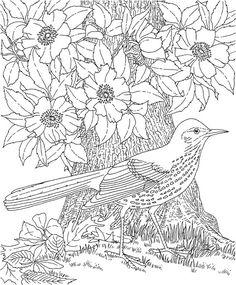 Coloring Page World: Bird