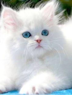 Blue-eyed beauty!
