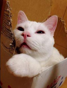 """寝顔が醜いセツちゃん、海外でも話題に!「日本の""""ジキルとハイド""""ねこ」と紹介/2014年12月21日 - 写真 - 気になる - ニュース - クランクイン!"""