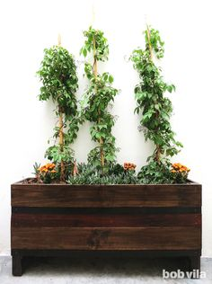DIY Lite: A Beginner's Guide to Building a Wooden Planter Box