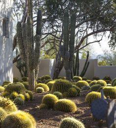 03_House of Desert Gardens_Colwell Shelor