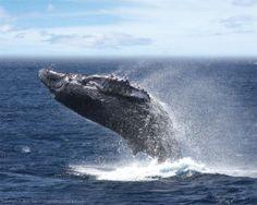 Oahu Day Cruise - Star of Honolulu Whale Watch Cruise