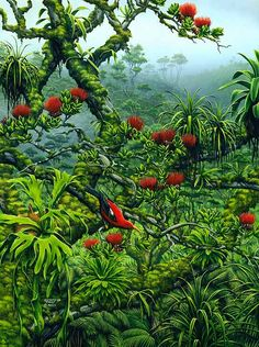 Waikamoi Rainforest Preserve Richard Fields @ Lahaina Printsellers