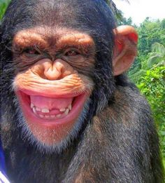"Here are 20 bizarre and funny pictures for you by Swishtoday. The real ""lol of the day"" photos will make you laugh the whole day. Animals funny smiling posses will make you giggle hard. Smiling Animals, Laughing Animals, Happy Animals, Animals And Pets, Funny Animals, Cute Animals, Animals Photos, Primates, Mammals"