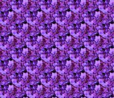 Purple Delight... by majik_rose