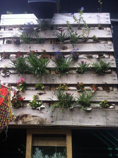 A lovely little green wall in the courtyard of the Railway Hotel in Albert St, Brunswick.