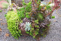 Overgrown Succulent Container Garden~how to rejuvenate it