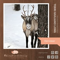 Today's creativity prompt is REINDEER. prompts are provided every weekday by author Terri Giuliano Long. Writing Art, Prompts, Reindeer, Art Photography, Moose Art, Creativity, Animals, Fine Art Photography, Animales
