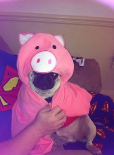 One of Alfie's presents. This is a pig hooded towel. If you are a pug owner, you should understand the connection ;-)
