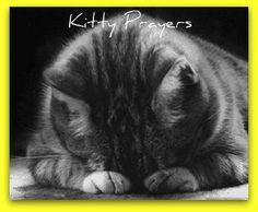 Kitty Prayers.