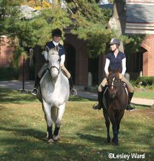 #MidwayCollege #equestrians  I What you need to know about taking your horse to college