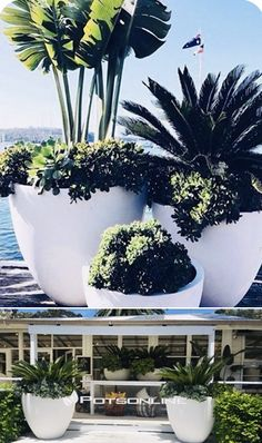 The Giant Egg Planter from Potsonline looks sensational as a using different sizes in the set or on their own as seen at The Boat House.
