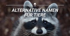 Wir sollten ab sofort nur noch diese Namen verwenden.