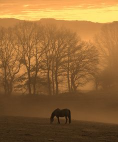 Country Sunrise Favorite time to ride. Beautiful Sites, Beautiful World, Beautiful Scenery, Beautiful Landscapes, Great Pictures, Cool Photos, Country Life, Country Living, Country Charm