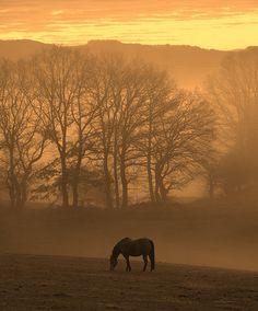 country sunrise. Stunning.