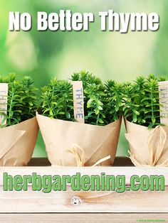 No Better Thyme herbgardening.com Herb Garden, Vegetable Garden, Growing Herbs Indoors, Container Gardening Vegetables, Diy Planters, Grow Your Own, Fresh Herbs, Hydroponics, Make It Yourself