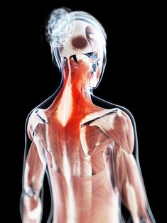 Persistent pain at the base of skull is suggesting slipped disc or arthritis of the neck. Inappropriate posture and damage to the occipital nerve passing through the neck area can also trigger pain at the skull base. Neck Pain, Lava, Health Fitness, Mindfulness, Pallet, Fitness, Consciousness, Health And Fitness