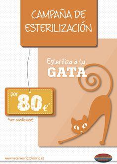 Campaña de esterilización de gatas. Más info en www.veterinariosolidario.es