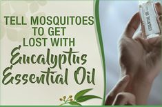 Eucalyptus essential oil can reduce stress, heal inflammation and boost the immune system in addition to helping with ASTHMA and acting as a DECONGESTANT. Eucalyptus Oil, Eucalyptus Essential Oil, Essential Oil Uses, Decongestant, Plant Therapy, Mosquitoes, Doterra Essential Oils, Aromatherapy, Essentials