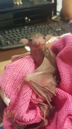 We Totally Appreciate These Photos Of Baby Bats - World's largest collection of cat memes and other animals Cute Creatures, Beautiful Creatures, Animals Beautiful, Cute Baby Animals, Animals And Pets, Funny Animals, Funny Baby Faces, Funny Babies, Funny Guys