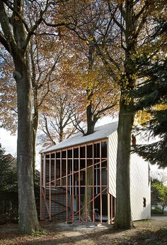 13 | An Incredible House Built Around A Growing Tree | Co.Design: business + innovation + design