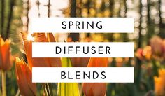 Top Essential Oil Blends for Spring to make your home smell like a garden