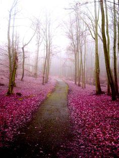I would love to take a walk here