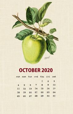 Botanical Fruit 2020 Calendar Printable Templates culinary Fruits Monthly Planner In botany Aggregate fruit Ovary Latest Designs 12 Months Yearly One Page October Calendar Printable, Free Printable Calendar Templates, Cute Calendar, Vintage Calendar, December Calendar, Monthly Calendar Template, Holiday Calendar, Calendar Wallpaper, Calendar Design