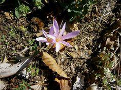 Tanto Piacere ;-) Autumn, Plants, Image, Fall Season, Fall, Plant, Planets