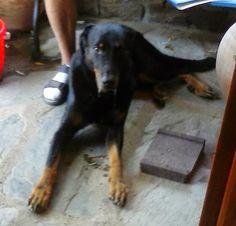 El Jiniebro Turismo Rural:Este hermoso perro,nos acompaña durante dos semanas ha llegado desde Holanda.
