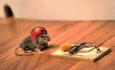 El ratón es muy tanaz a comer el queso.