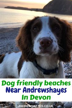 Andrewshayes lists the Top Best East Devon Dog Pet Friendly BEACHES. Plenty of beaches for you and your pet to enjoy on Holiday in East Devon. Local Beaches, Dog Friendly Holidays, Pet Dogs, Pets, Summer Months, Dog Walking, Dog Friends, Axe, Devon
