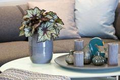 Výsledek obrázku pro begonia elatior